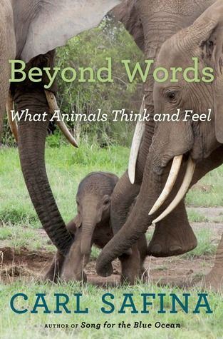 animal behavior beyond words