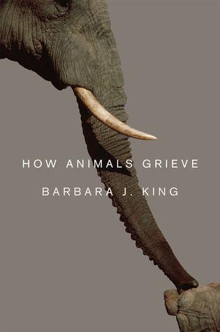 animal behavior how animals grieve